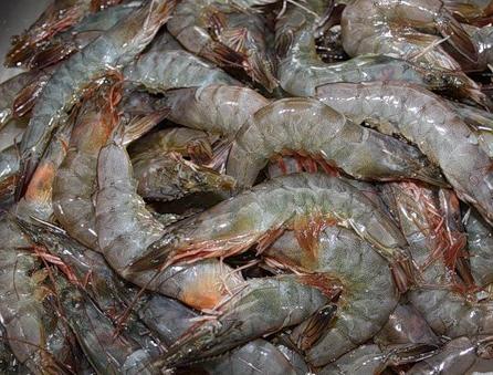 Kjøp Reker (Shrimp)
