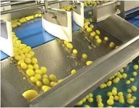 Kjøp Food Sorting & Processing