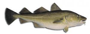 Sea cod