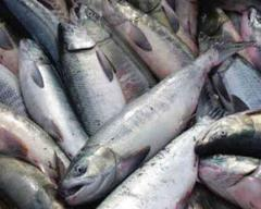 Laks (salmon)
