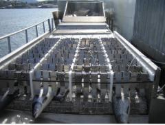 Seaside strømbedøver, sorterings maskin