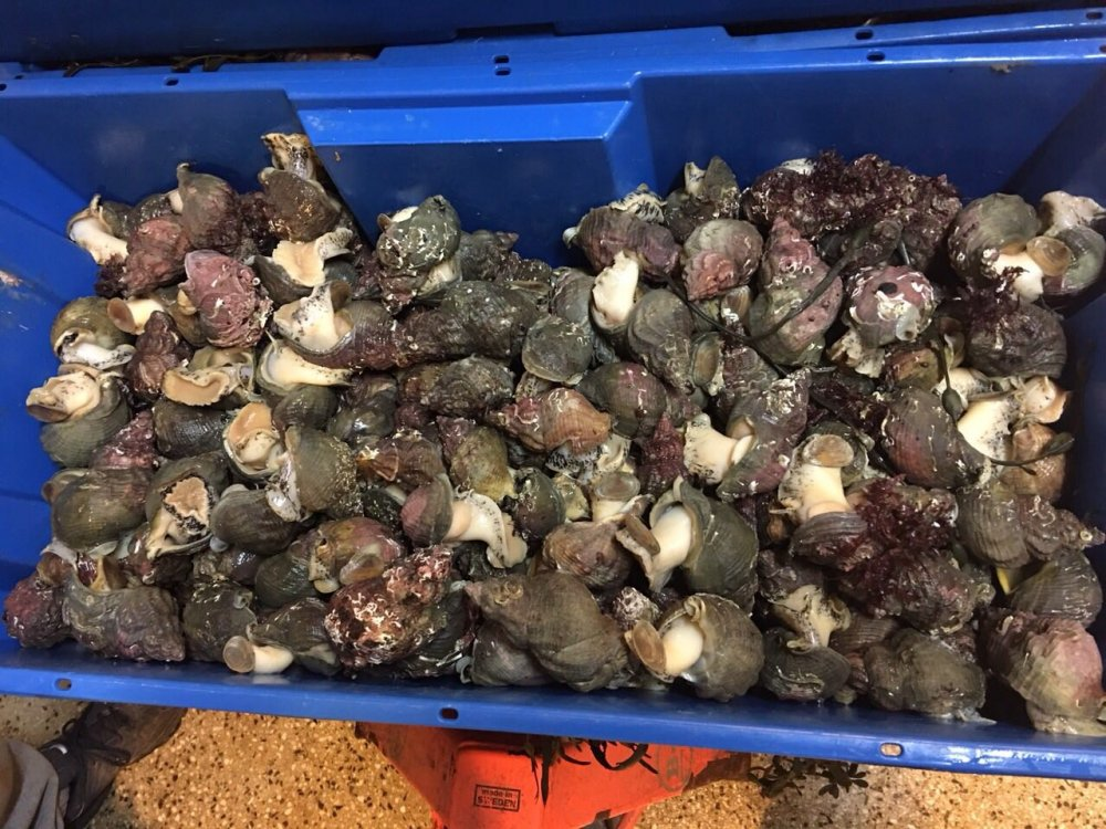 krabbe_kamskjell_fisk