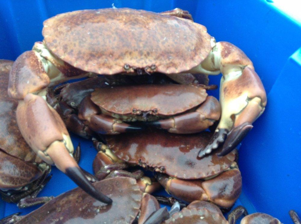 brown_krabbe_kamskjell_fisk