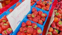 Norske jordbærbønder gir seg - importen øker